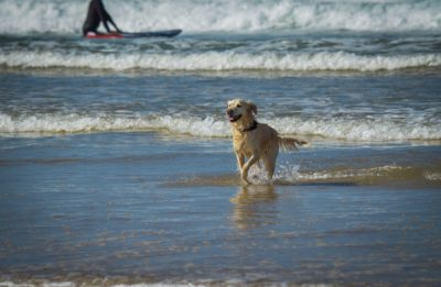 veterinaire-verviers-abyssin-prevention-vacance-chien